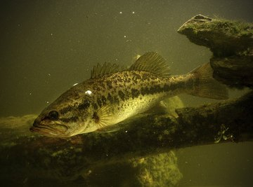 Increased acidity from acid rain can reduce or eliminate fish populations.