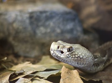 The Common Snakes of Oklahoma