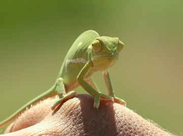 What Are the Adaptations for Reptiles to Live on Land