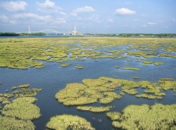Wetlands do more than give frogs a place to live.