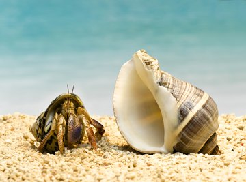 Crabs thrive in many different environments.