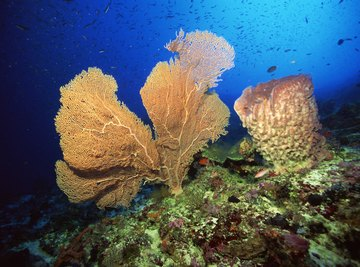 The sea sponge breathes by diffusion across each cell membrane.