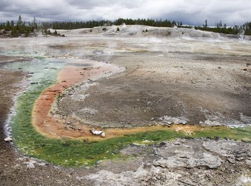 Algae refers to a wide variety of organisms.