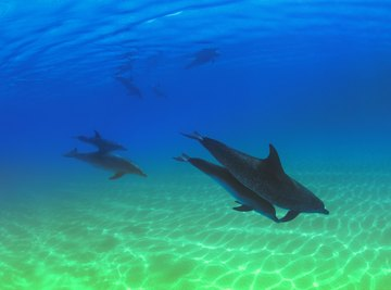 There are 39 species of dolphin.