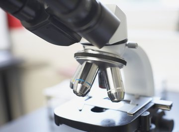 Difference Between Compound & Dissecting Microscopes