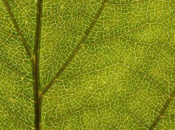 What Happens in the Light Reaction of Photosynthesis