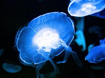 Jellyfish Adaptations