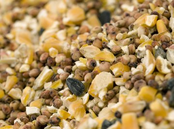 Experiment with different seed mixtures and observe which ones attract different birds.