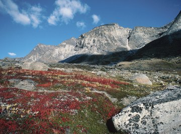The Alpine tundra is the highest living zone on earth.