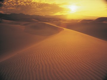 The sun's rays are unforgiving to both plants and animals in the desert.