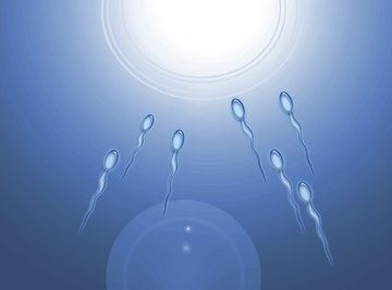 Sperm cells are transported by rear-mounted flagella.
