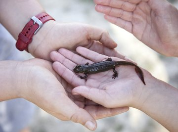 Two children hold a newt.