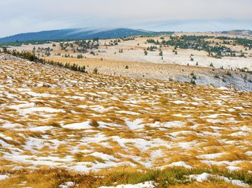 many plants and animals make the harsh tundra their home