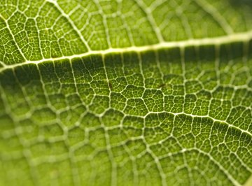 Plant cells are responsible for the oxygen animals need to survive.