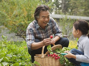 Grandfather and granddaughter putting garden vegetables in a basket.