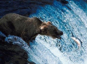 Predator and prey interactions are biotic factors in an ecosystem.