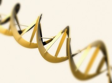 DNA found in cells assumes a double helix structure.