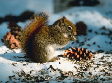 Squirrels are cute until they damage your property.