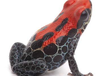Bright colors can signify that a frog is poisonous.
