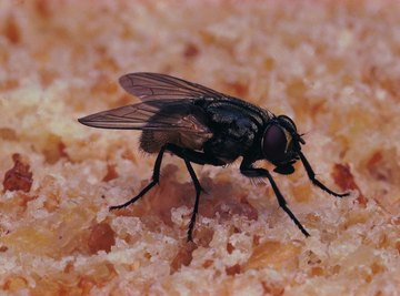Fly larva are sometimes called wrigglers.