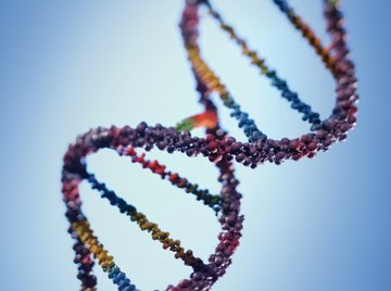 The DNA strand contains the instructions for the functioning of living things.