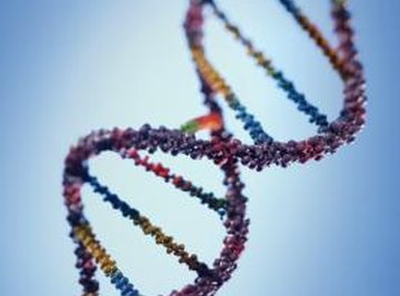 Polymerases are needed to faithfully copy DNA.