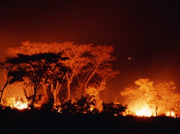 Destructive as a forest fire may seem, forests often regrow in their wake.