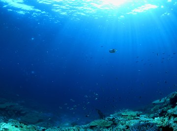 Phytoplankton are the primary producers of nutrients for the open-ocean food web.