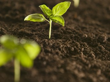 Plants can take up pollutants and pass them on to grazing animals.