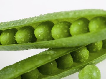 Heterozygous peas are rounded, not wrinkled.