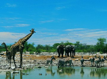 Animals gathering around a watering hole.