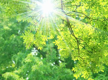 What Is Reduced & Oxidized in Photosynthesis