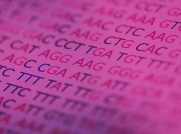 The human genome consists of approximately 3.3 billion genetic letters.