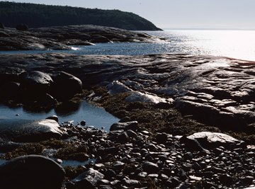 The high tide refills the tide pools with fresh ocean water.