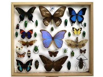All bugs, from beetles to butterflies, have a respiratory system that does not include lungs.