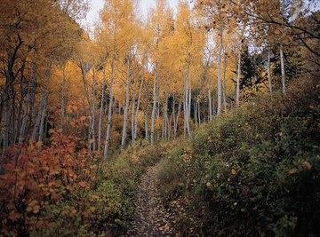 A deciduous forest in autumn.