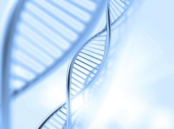 A range of simple and complex tools can be used to determine genotype.