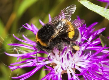 Insects are the most common pollinators that make sexual plant reproduction possible.