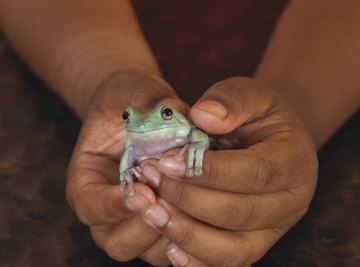 Most reptiles are cold-blooded, and most mammals are warm-blooded.