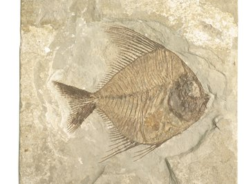 The earliest fossils of vertebrates are those formed by fish.