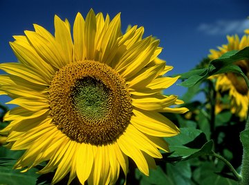 Like a sunflower, a solar tracker lets you harness more of the sun's power.