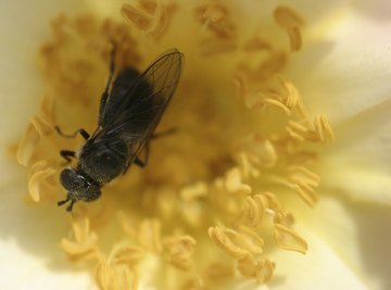 Teach kids about pollination through a series of activities.