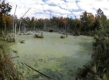 Unchecked algae growth can make an environment inhospitable for other life.
