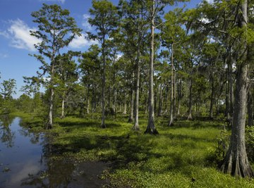 Acid rain in wetlands may slow global warming.