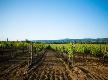 California's Mediterranean climate makes it ideal for vineyards.