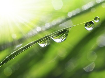 Dew is formed by condensation.
