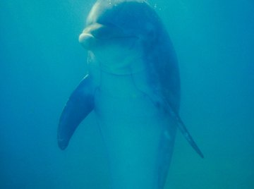 Chemical pollutants poison dolphins and destroy their habitats.
