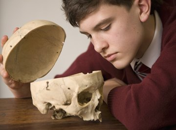 Memorizing the parts of the skull ultimately requires looking at the skull itself.