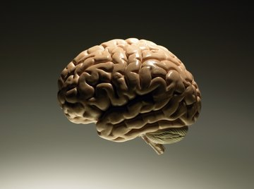 The brain and spinal cord make up the central nervous system.