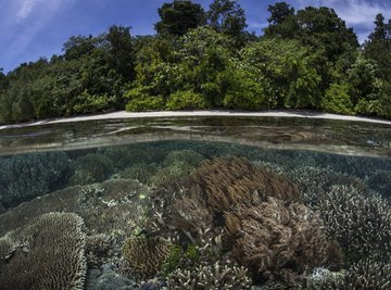 A diverse coral reef at the bottom of clear water on the coast of a tree covered island.